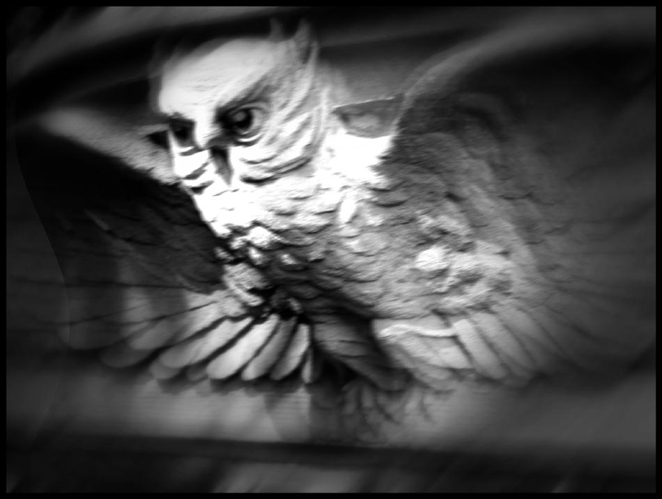 noir owl b fr - mtpmcg707 - 316 sm - 1392