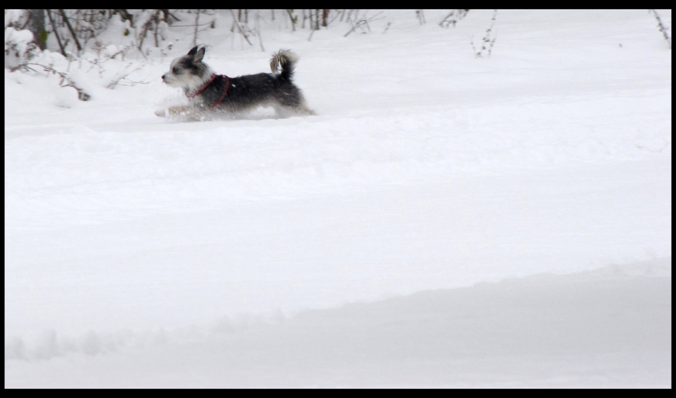 flynn-in-snow-d2-fr-mtpmcg121116-sm-9018